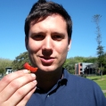 food3_tl_richard_juicy_strawberry